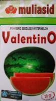 buah besar, daging merah, buah bulat, semangka non biji, Valentino,  Non Biji Dinar, semangka Valentino, Buah Lonjong, Buah Oval,  Benih Mulia