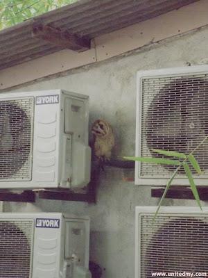 Owl Penang Bird Park 2016