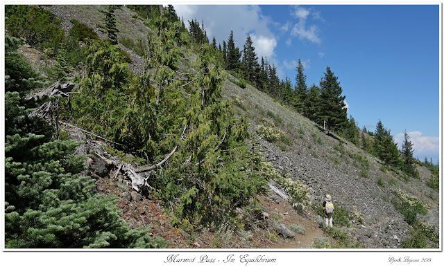 Marmot Pass: In Equilibrium