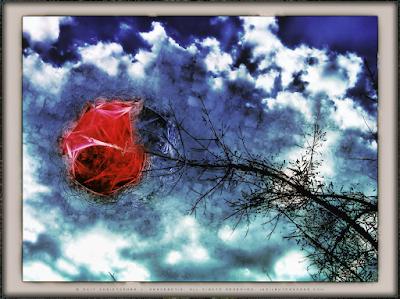 The Sky Rose of Sunday Copyright 2017 Christopher V. DeRobertis. All rights reserved. insilentpassage.com