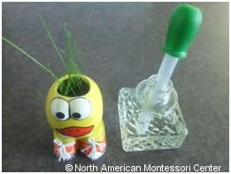 NAMC Montessori Preschool planting activities classroom ceramic duck grass hair