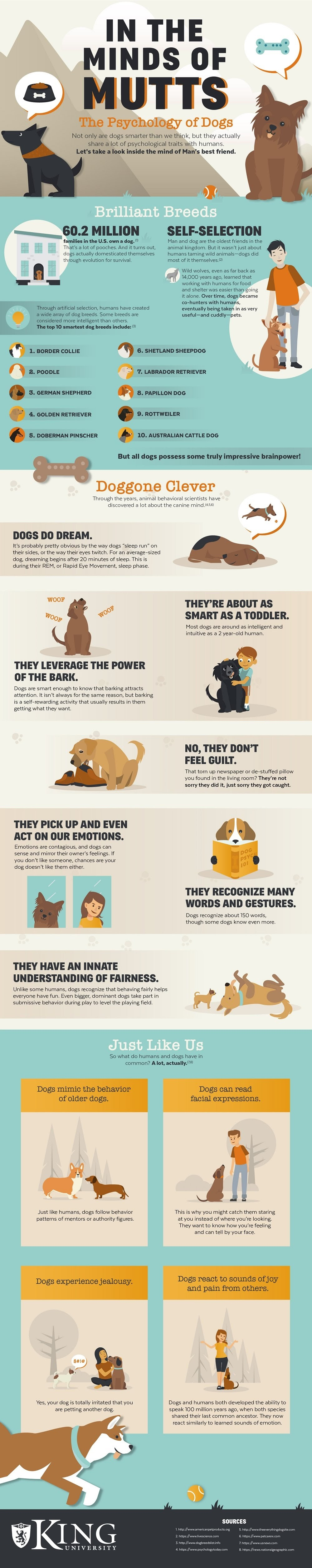 Dog Psychology: In the Mind of Mutts