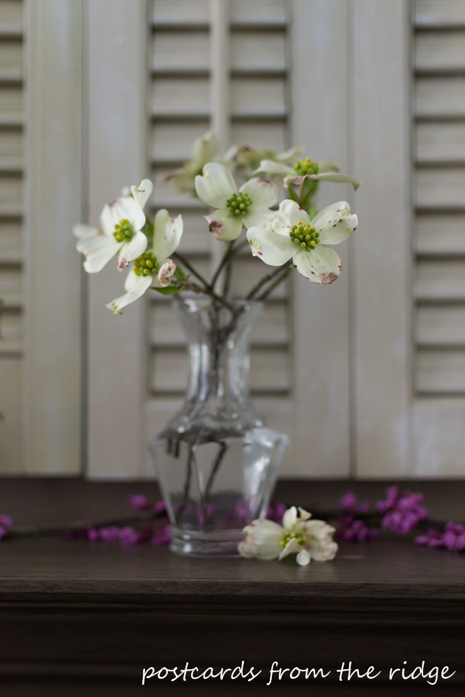 dogwood blossoms in a glass vase