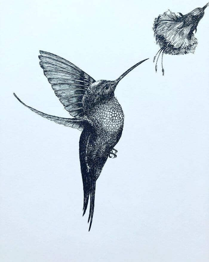 03-Hummingbird-Bas-Geeraets-Black-and-White-Drawings-of-Birds-www-designstack-co