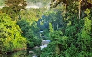 Pengertian ekosistem yaitu sistem ekologi yang terbentuk alasannya yaitu terdapat kekerabatan timbal Pengertian Ekosistem, Komponen, dan Tipe-Tipe Ekosistem, Lengkap!