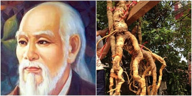 Vì sao danh y Hải Thượng Lãn Ông gọi đinh lăng là 'cây Sâm của người nghèo'?