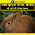 सबसे खूबसूरत जानवर- खरगोश के बारे में रोचक तथ्य:-/Rabbit's Amazing Facts In Hindi