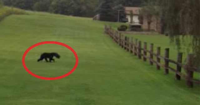 MUST WATCH: You'll Never Guess What This Couple Did When They Found This Black Bear While Walking!MUST WATCH: You'll Never Guess What This Couple Did When They Found This Black Bear While Walking!