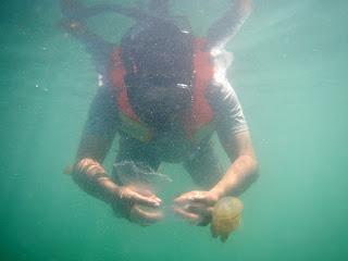 Snorkeling di Kakaban