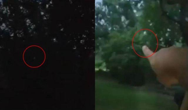Strange Light Entity in the Woods  Light%2Bentity%2Bwoods%2Bmystery