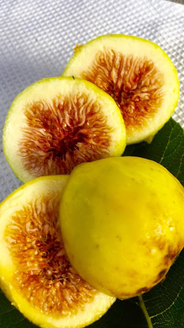 Albacor Blanca Figs