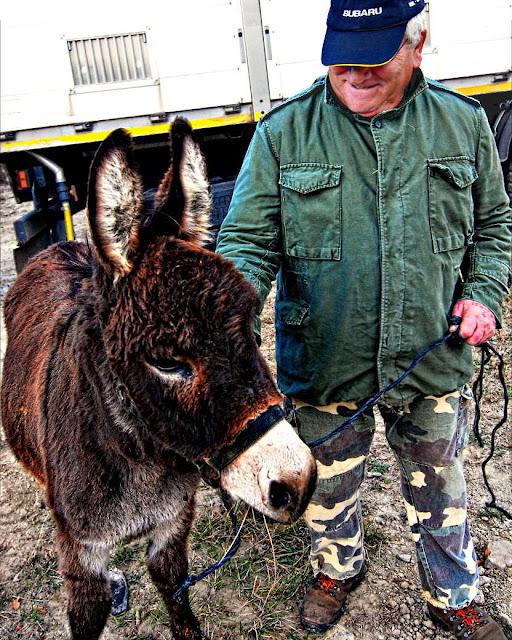 Nuevo burro en el pueblo