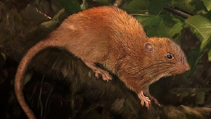 Wow, Ilmuwan Kini Bisa Membaca Pikiran Tikus