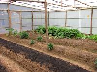Puriscal garden