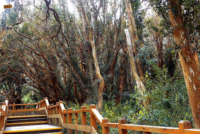 Bosque Arrayanes - Bariloche