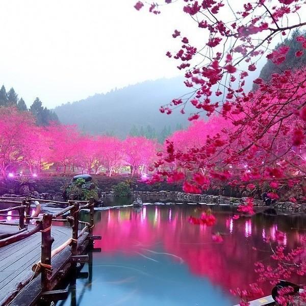 _Japan: الفصول الاربعة في اليابان