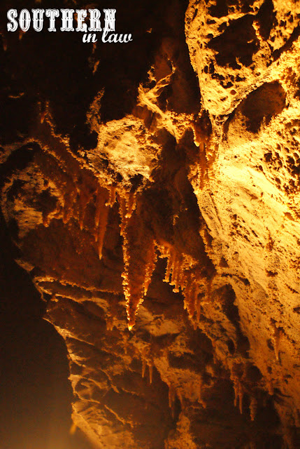 Southern In Law New Zealand Travel Reviews - Waitomo Glowworm Caves Review and Discounts