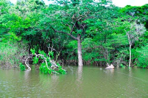 Rio Xeruiní