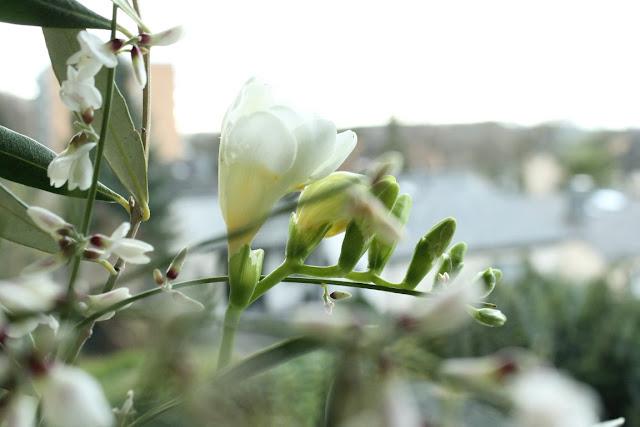 Fresien frische Blumen Jules kleines Freudenhaus Mutterfuersorge