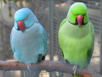 Cute Parakeet Wallpaper All Beautiful Birds Beautiful Parrots