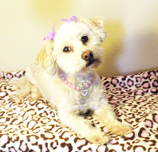 Phoebe is a rescue dog, adopted from a county shelter in Phoenix Arizona.  Today we remember all the dogs and cats in shelters who never found their forever homes.  #RememberMeThursday
