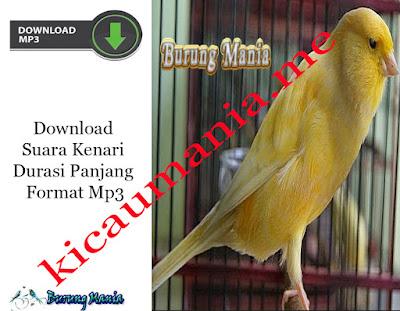 Download Suara Kenari Durasi Panjang Format Mp3