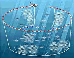 Kriteria Alat Penangkap Ikan Ramah Lingkungan Kabar Terbaru- PURSE SEINE