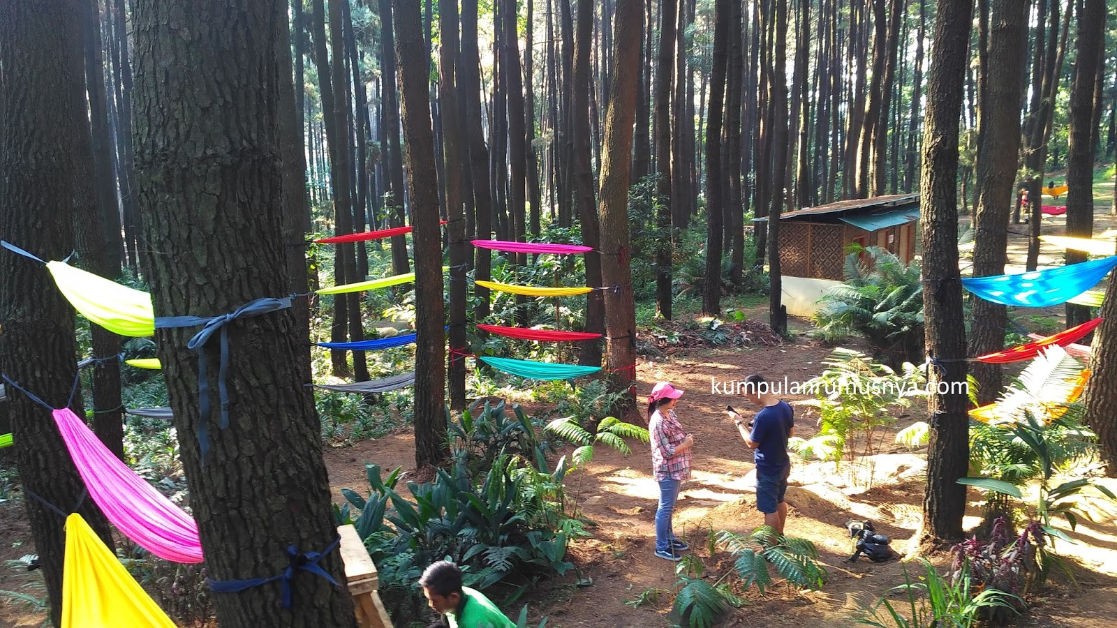 Image Wisata Gunung Pancar Hutan Pinus
