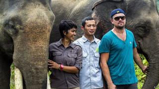 DiCaprio Terancam Dilarang Ke Indonesia, Jika Terbukti Menghasut, Taman Nasional Gunung Leuser (TNGL)