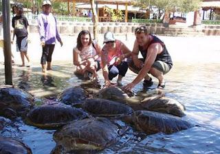http://www.teluklove.com/2017/03/destinasti-objek-wisata-pulau-penyu.html