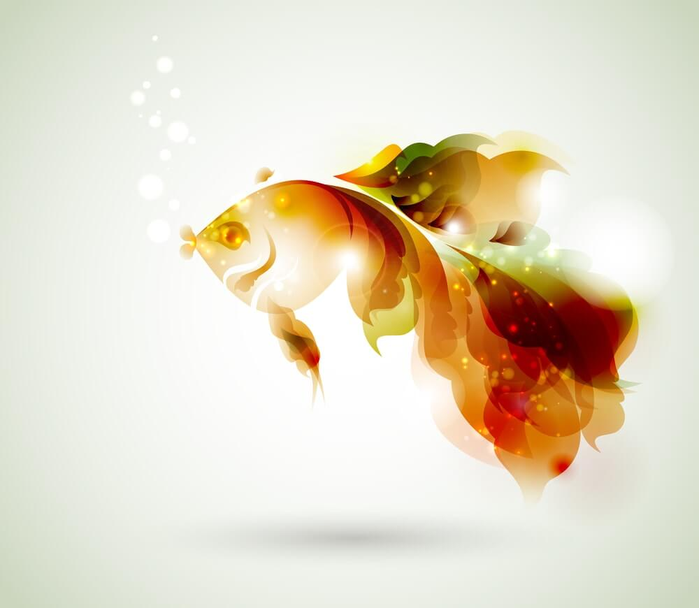 Beautiful Fish Creative Images