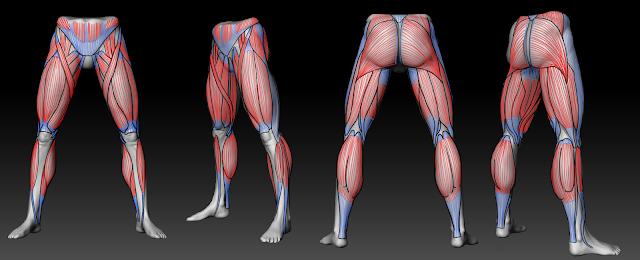 Anatomía de las piernas | Lourdes Del Castillo