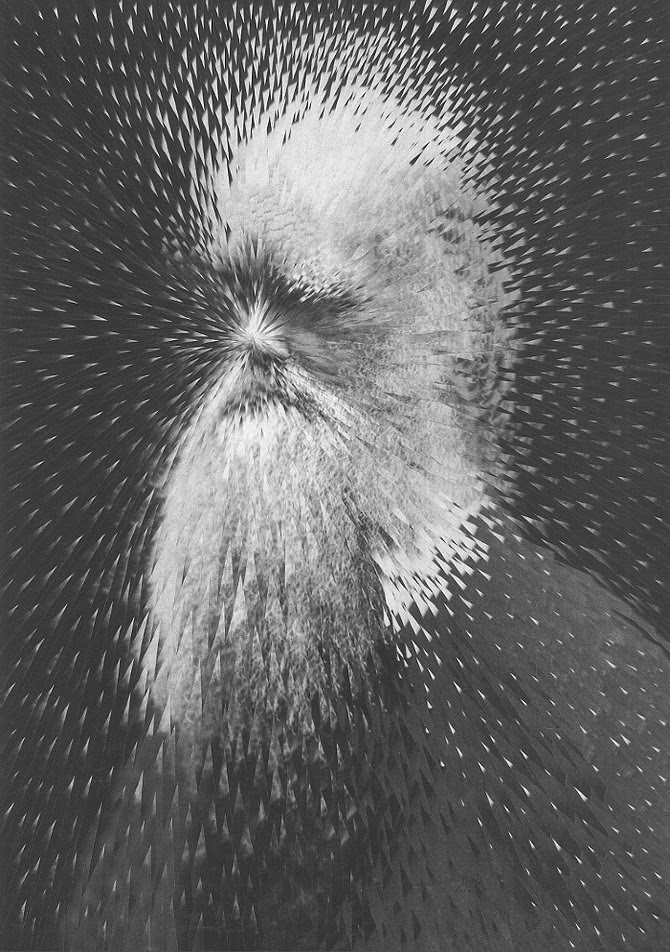 04-Charles-Darwin-Lola-Dupré-Collage-Exploding-Photographic-Portraits-www-designstack-co