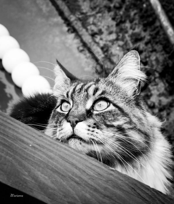gatti venice