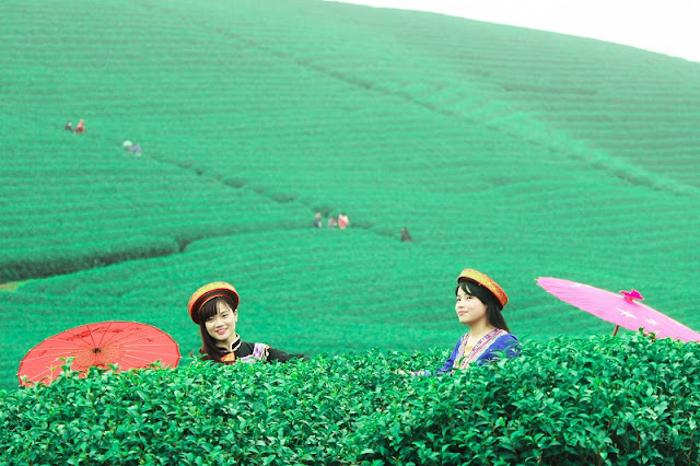 Dreaming Between Green Tea Hill in Moc Chau Plateau 2