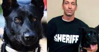 Συμμορία έσυρε αστυνομικό στο δάσος για να τον σκοτώσει αλλά δεν υπολόγισε τον αστυνομικό σκύλο