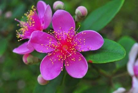 Hoa dại màu tím