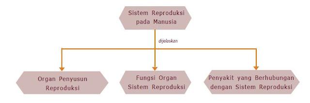 Pengertian Sistem Reproduksi pada Manusia