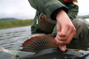 63b0955ae4e0 Si queréis ver el resto del catálogo de Vision Fly Fishing podéis pinchar  en el siguiente enlace  CATÁLOGO VISION FLY FISHING Saludos!