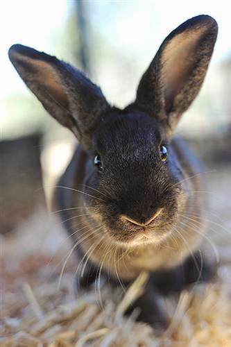 5 Adorable and Adoptable Rabbits for Adopt a Rescued ...