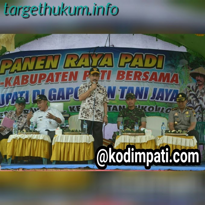 Dandim 0718 PATI Bersama Bupati Ikut Panen Raya Padi di Desa Prawoto
