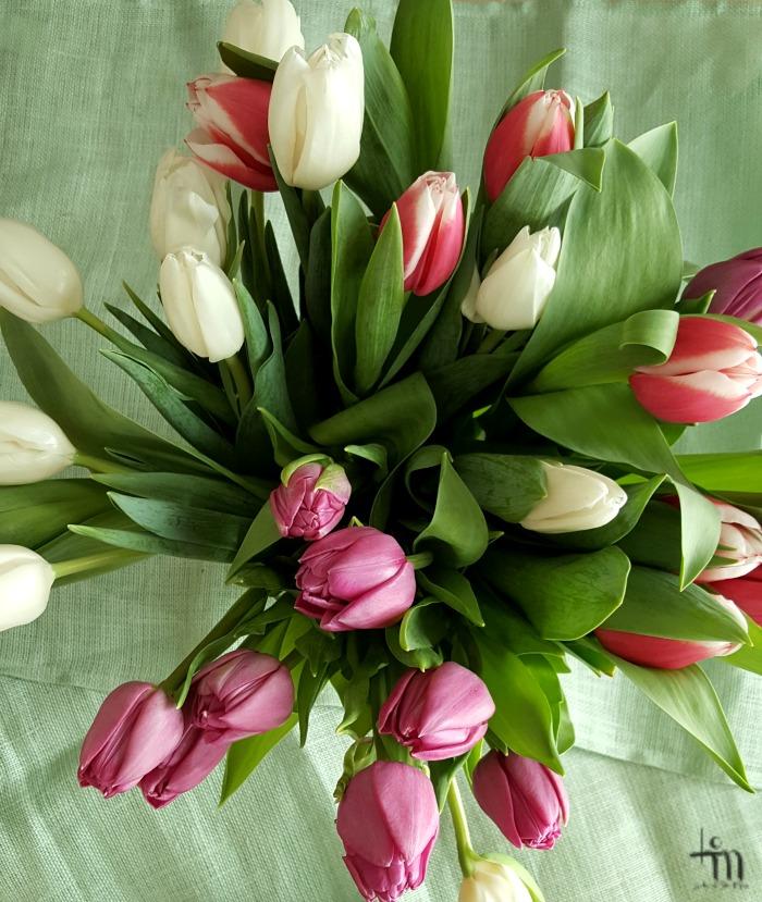 valkoisia, vaaleanpunaisia ja punaisia tulppaaneja kimpussa