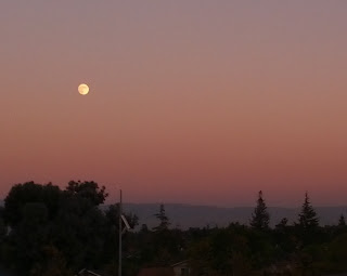 Almost full moon rising in the east in a sunset pink sky