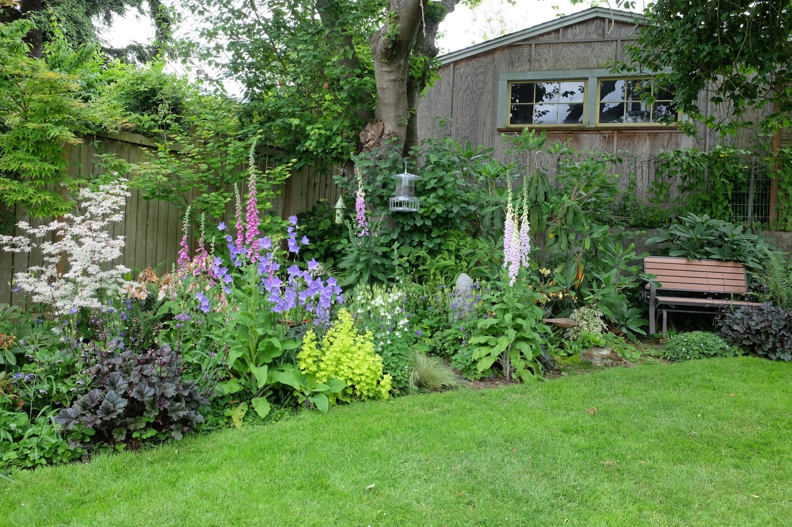 Megan Seagrens Journal Planting A New Pacific Northwest Shade Garden