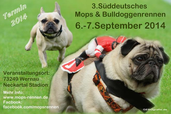 Mops und Bulldoggen Rennen 2014