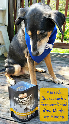 senior rescue dog merrick food