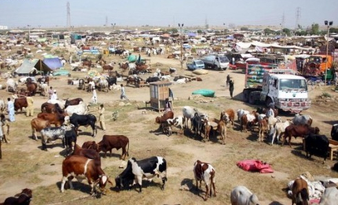 cattle colony fulani herdsmen nigeria