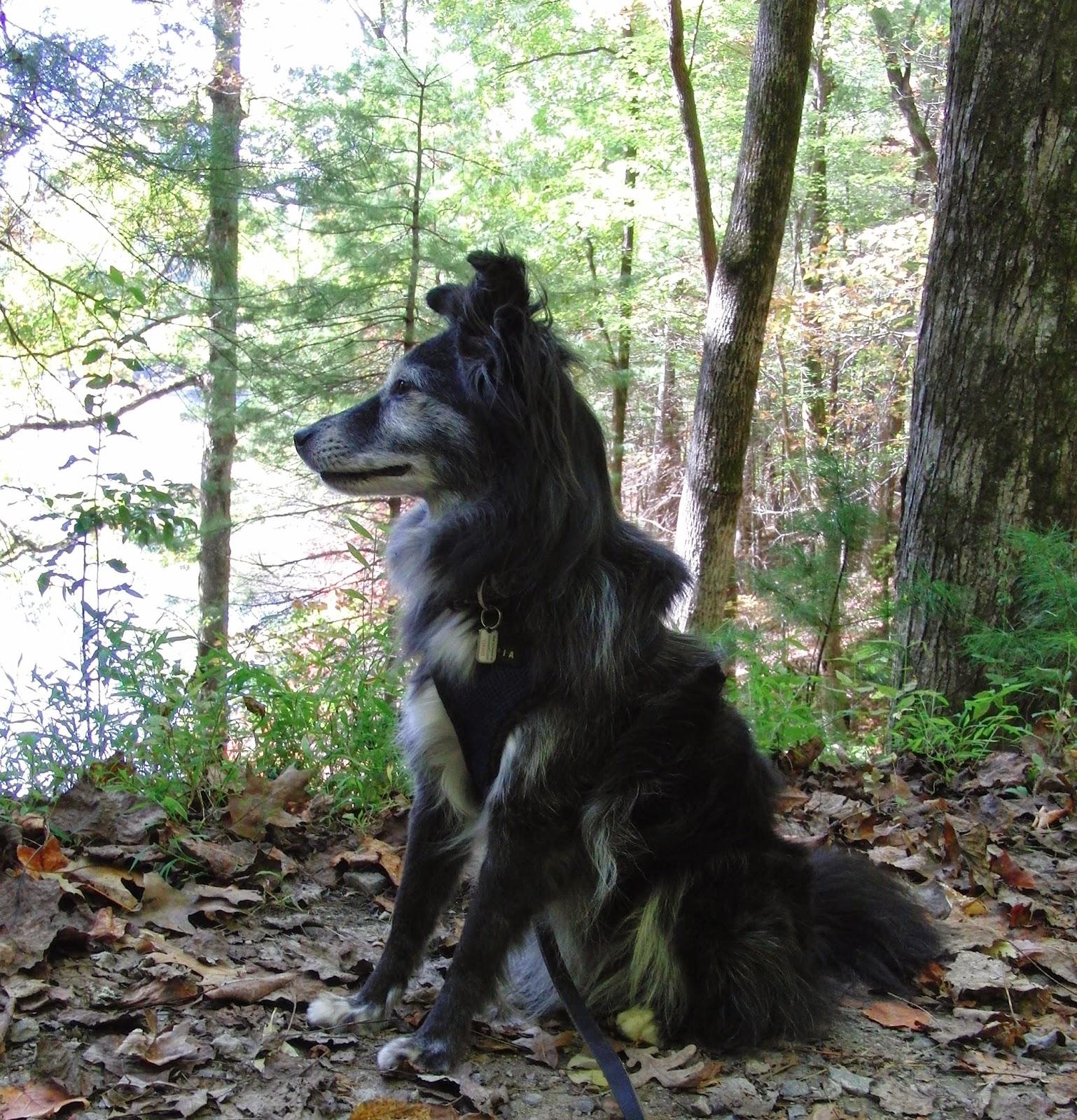 The Days Of Johann An Agility Dog Hiking Anna Ruby
