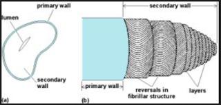 anatomi bagian serat kapas