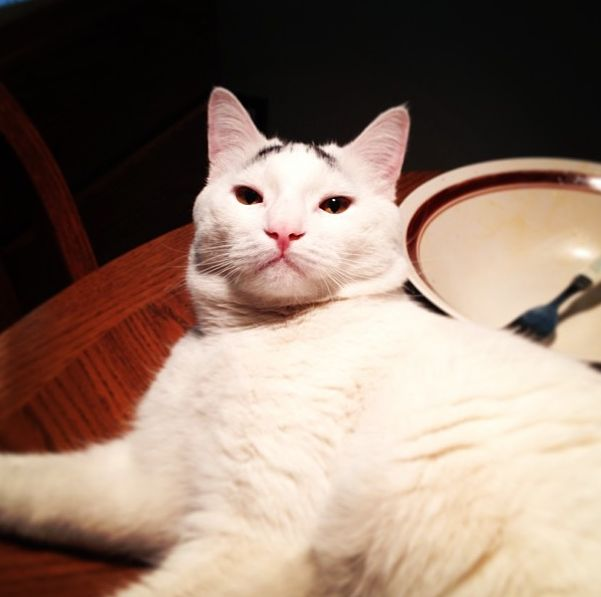 Meet Sam The Cat With Eyebrows 20 Pics Amazing Creatures